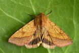 Magical Moths - Family event, Norfolk Wildlife Trust Cley Marshes, Coast Road, Cley, Norfolk, NR25 7SA | Learn about the fascinating lives and behaviours of moths. | Workshop, family, walk, talk