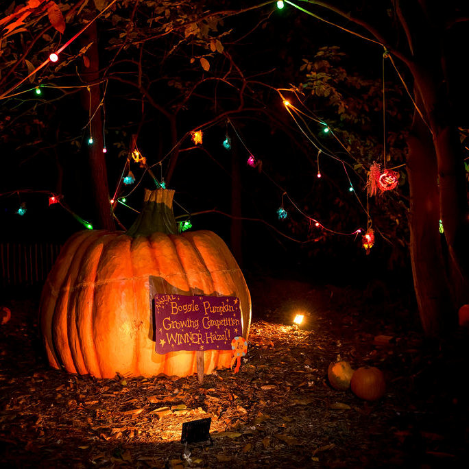 The Glorious Glowing Lantern Parade | The Glorious Glowing Lantern Parade is a celebration of all things magical and spooky. You will find yourselves winding through our wonky woodland! | BeWILDerwood, Horning Road, Hoveton, Norfolk, NR12 8JW