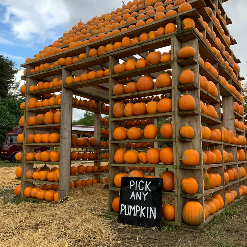 The Pumpkin House, Brookhill Farm, Fakenham Road, Thursford, GB, NR210BD | Come and visit us at the Pumpkin House. Decorated with over 1,000 pumpkins come and choose your perfect Jack o'lantern from our shelves. | Halloween, Pumpkins