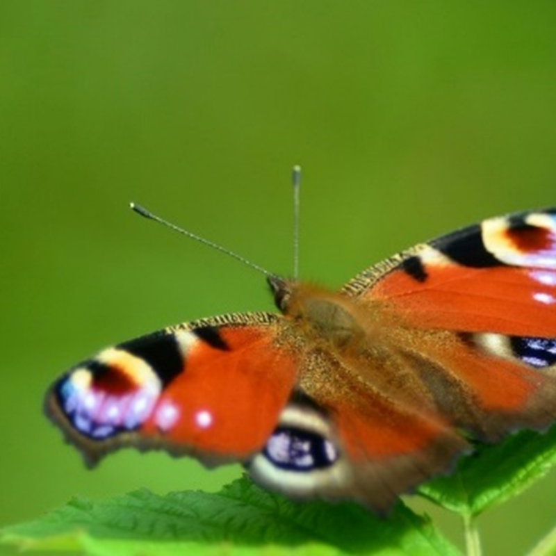 NWT Children's Wildlife Watch - Butterflies a | Family event | NWT Hickling Broad Stubb Road Hickling NR12 0BW