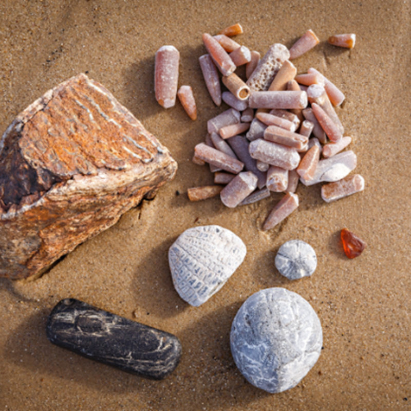 Fascinating Fossils, West Runton Beach Water Lane West Runton Cromer NR27 9QP  | Family event | North Norfolk coast, wildlife, fossils, history, beach, flint, chalk, fossil-hunting, belemnites, West Runton Mammoth