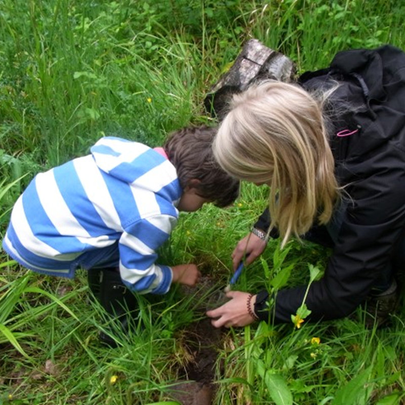 Miraculous Minibeasts, NWT Pigneys Wood Hall Lane Knapton NR28 0SH | Family event | Minibeasts, camouflage, woodland, carnivore, herbivore, Norfolk woods