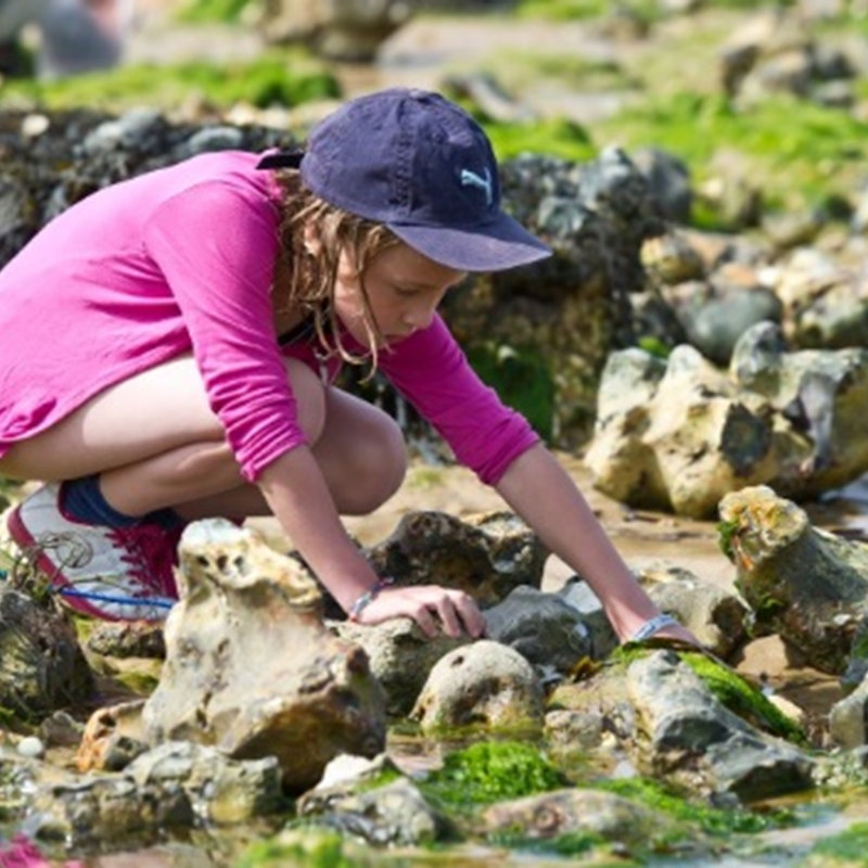 Rockpool Rummaging, West Runton Beach Water Lane West Runton Cromer NR27 9QP  | Family event | North Norfolk coast, rockpools, wildlife, habitat, beach, nature