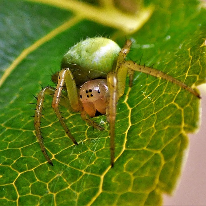 NWT Children's Wildlife Watch - Spiders | Family event - Dalegate Market | Shopping & Café, Burnham Deepdale, North Norfolk Coast, England, UK