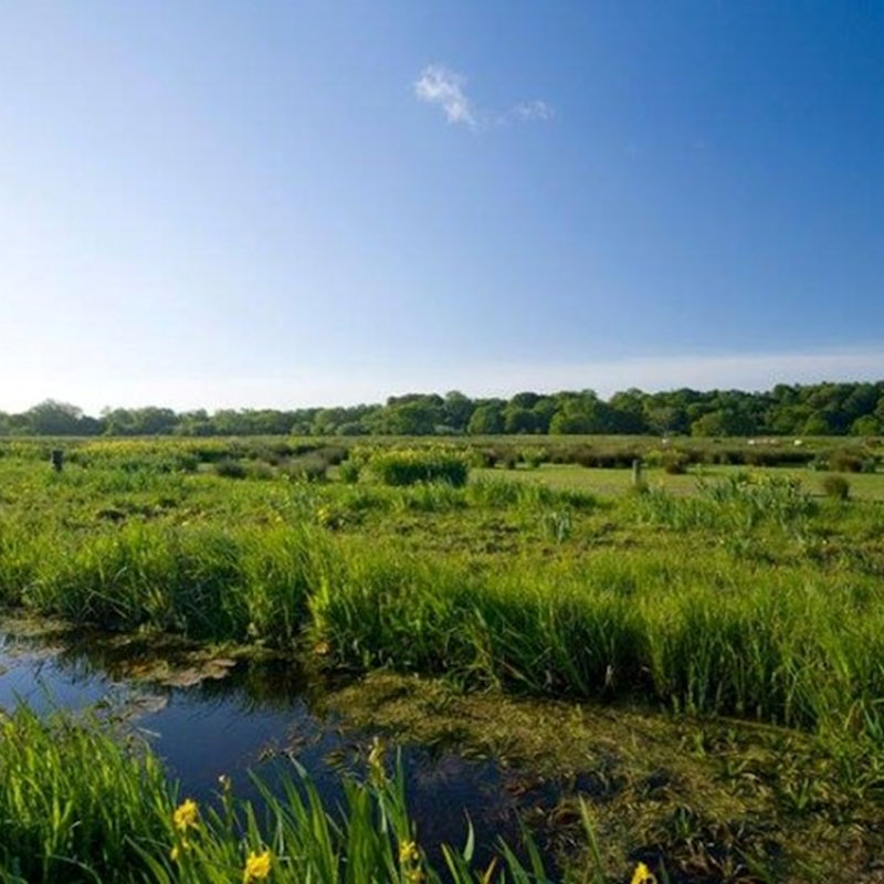 Thorpe Marshes Guided Walk, NWT Thorpe Marshes Nature Reserve Whitlingham Lane Norwich NR7 0QA   | Family event | Walk, nature, wildlife, bird watching, Norfolk Broads