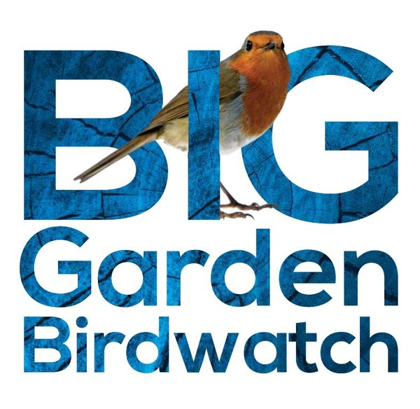 Big Garden Birdwatch Bonanza, Titchwell Marsh | Get ready for the Big Garden Birdwatch by getting to know your garden birds! | Nature, Big, Garden, Bird Watch, Big garden Birdwatch, Idnetification, self-guided, learn, child friendly, family, activities, fun, outdoors