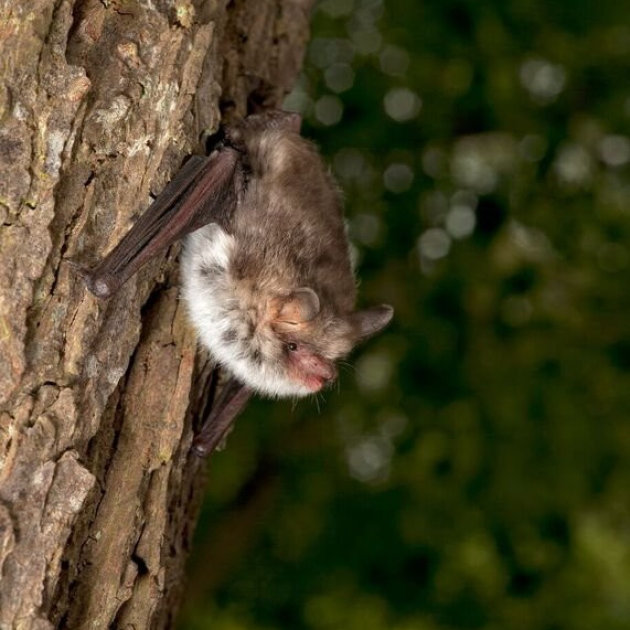 Bat Night, St Andrews Church, Deopham, Norfolk | A series of summer Bat Nights, with live, infra-red cameras. There may even be some captive bats to see up close! | bats, wildlife, family event, outdoors, animals,