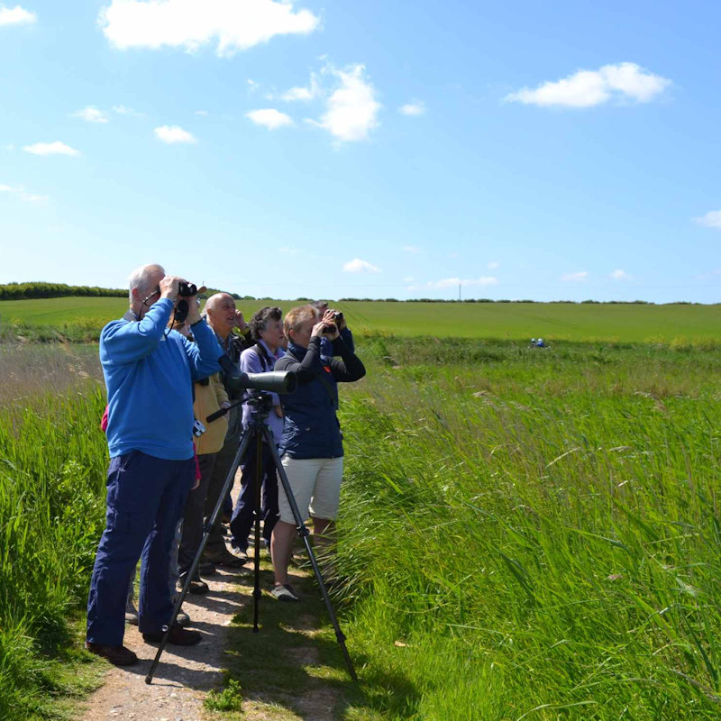 Circuit of Cley, NWT Cley Marshes NR25 7SA | A guided circuit walk around the reserve and along the shingle ridge  | Walking, guided, wildlife