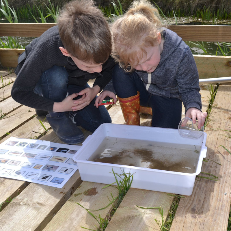 Family Event: Pond Dipping, NWT Cley Marshes NR25 7SA | Join us at our custom-built platform and learn about the wonderful wildlife that can be found in ponds and dykes | Nature, family, marine life