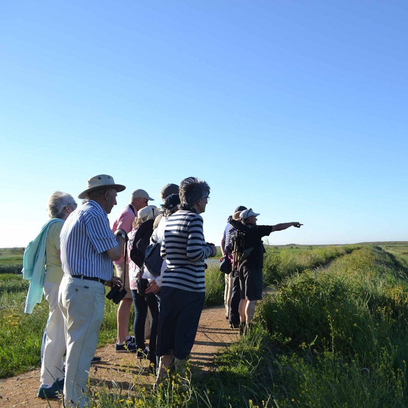 Legstretch to Salthouse, NWT Cley Marshes NR25 7SA | Join us for a longer walk exploring the less well visited parts of our reserve whilst taking in the wider living landscape and Cley Marshes place within it | Walking, guided, wildlife