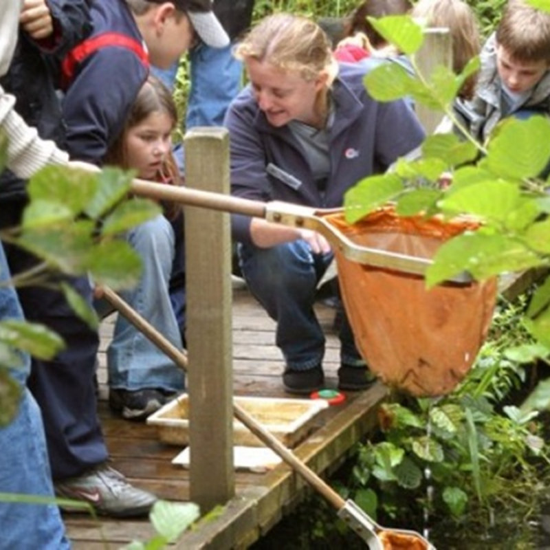 Dyke Dipping, NWT Ranworth Broad Broad Road Ranworth NR13 6HY  | Family event | Dykes, freshwater insects, carnivore, herbivore, habitat, Norfolk Broads