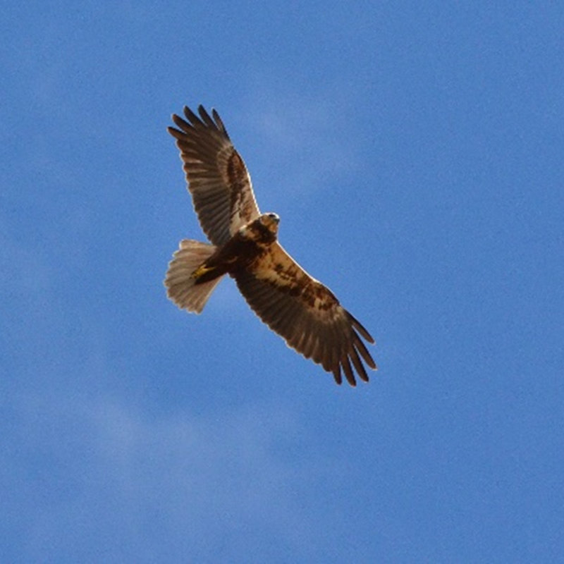 Family Raptor Roost |  | NWT Hickling Broad Stubb Road Hickling NR12 0BW