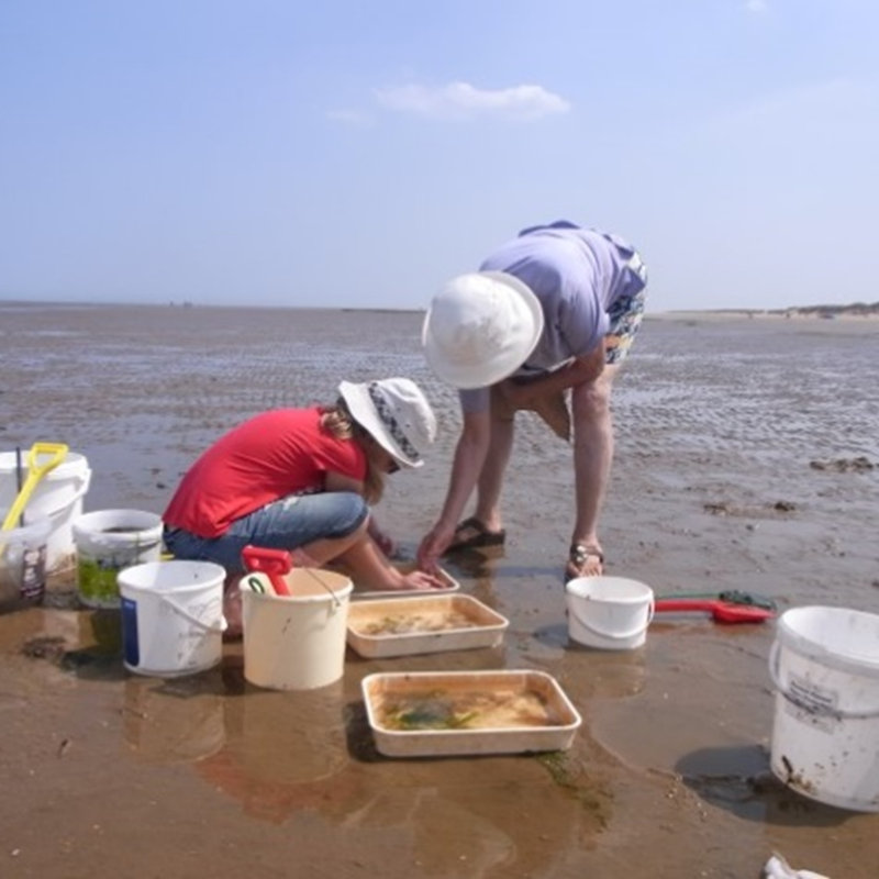 Sea Dipping, NWT Holme Dunes Broadwater Lane Holme next-the sea PE36 6LQ  | Family event | North Sea, beach, razor clams, fish, prawns, crabs