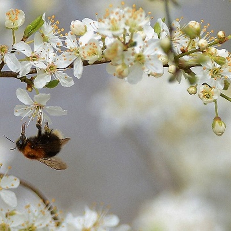 NWT Children's Wildlife Watch - Bumblebees, NWT Hickling Broad Stubb Road Hickling NR12 0BW  | Family event | Bees, flowers, pollination, species identification, Norfolk Broads