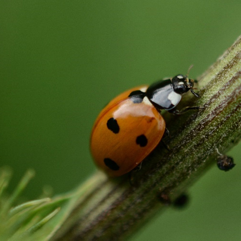 NWT Children's Wildlife Watch - Ladybirds | Family event | NWT Hickling Broad Stubb Road Hickling NR12 0BW