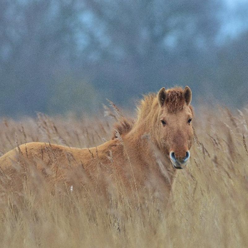 NWT Children's Wildlife Watch - Pony Checks, NWT Hickling Broad Stubb Road Hickling NR12 0BW    Family event   Nature, wildlife, ponies, grazing, habitat management, Norfolk Broads