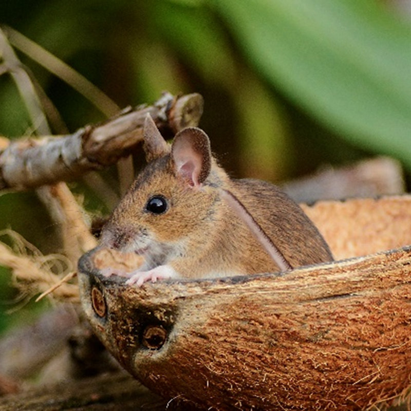 Children's Wildlife Watch - Small Mammals | Family event | NWT Hickling Broad Stubb Road Hickling NR12 0BW