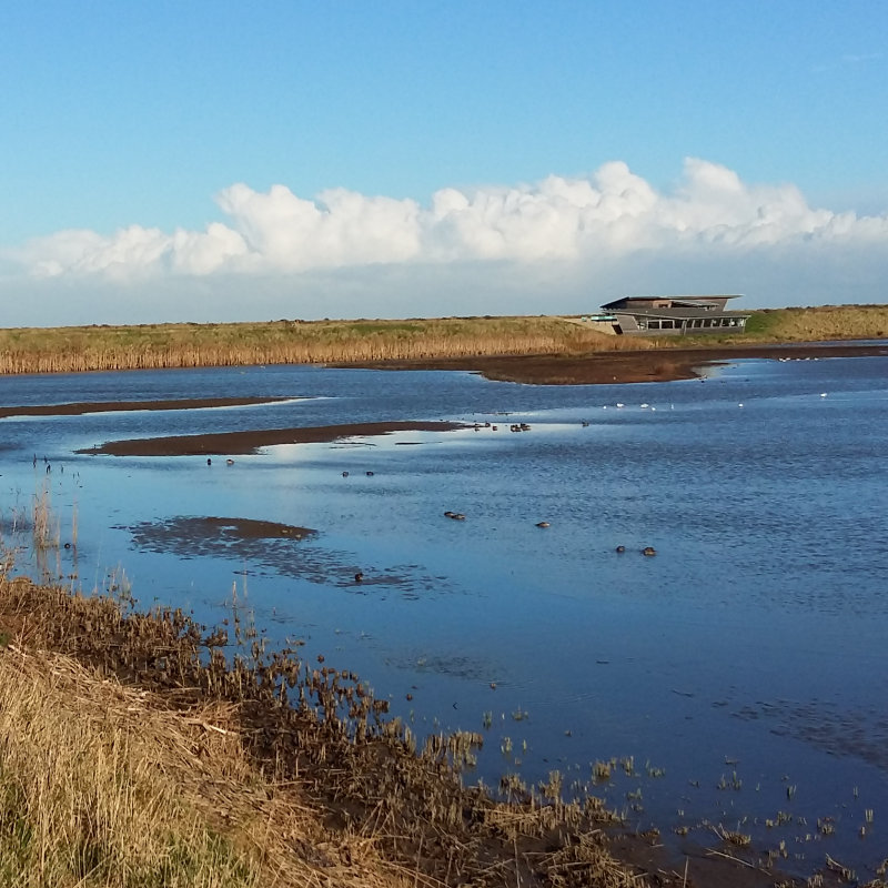 Beginners Birding | An informal walk aimed for beginners, designed to help you understand the basics. | Titchwell Marsh