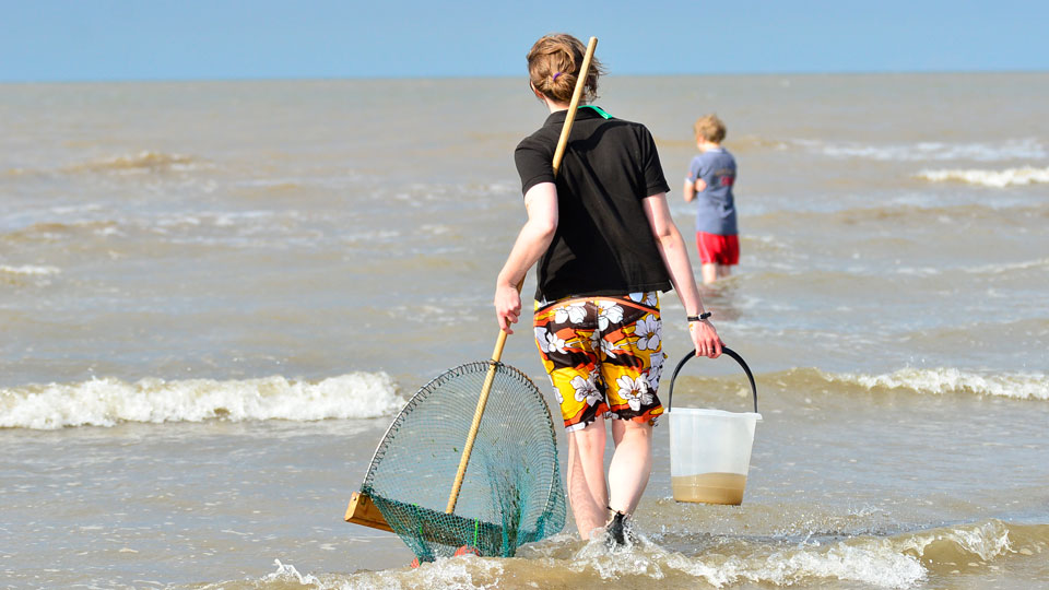 Sea Dipping, NWT Holme Dunes, Broadwater Lane, Holme, North Norfolk Coast, PE36 6LQ | Today we will be plunging for prawns and dunking for dabs, as we go sea dipping at NWT Holme Dunes. | norfolk, north, coast, wildlife, trust