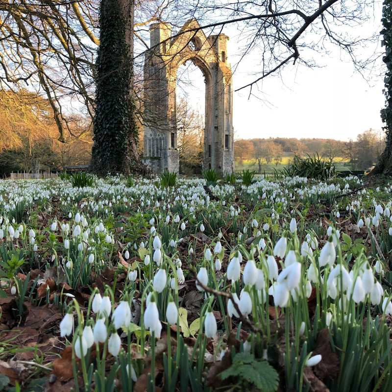 Snowdrop Walks, Walsingham Abbey & The Shirehall Museum, Common Place, Little Walsingham, Norfolk, NR22 6BP | Walsingham Abbey's beautiful snowdrop walks will be open again from late January 2019. Come and explore 18 acres of woodland and river walks carpeted with naturalised snowdrops. | snowdrop, walks, walsingham, abbey, norfolk, restored, gardens