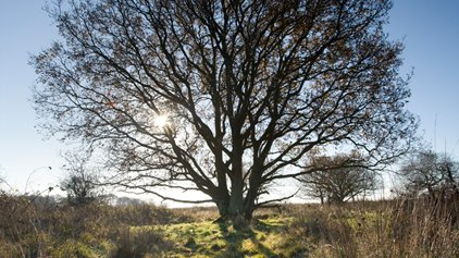 Tremendous Trees, NWT Foxley Wood, Foxley, Dereham, Norfolk, NR20 4QR | Join us at NWT Foxley Wood and learn all about the tremendous trees which can be found in Norfolk's largest ancient woodland. | norfolk, north, coast, wildlife, trust