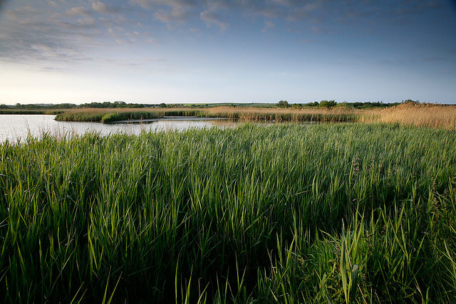 Ray's Rambles, RSPB Titchwell Marsh nature reserve | Wildlife and wonders. Guided walk at RSPB Titchwell Marsh with wildlife expert Ray Kimber. | Wildlife, walk, outdoors, discover, enjoy